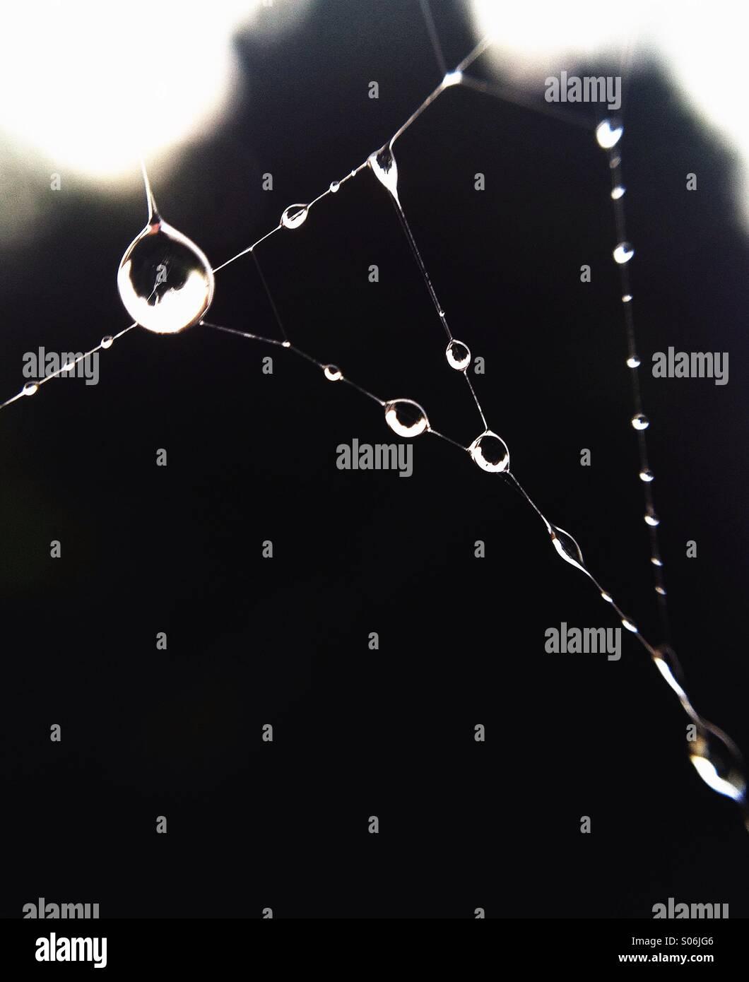 Gotas en telaraña al amanecer Imagen De Stock