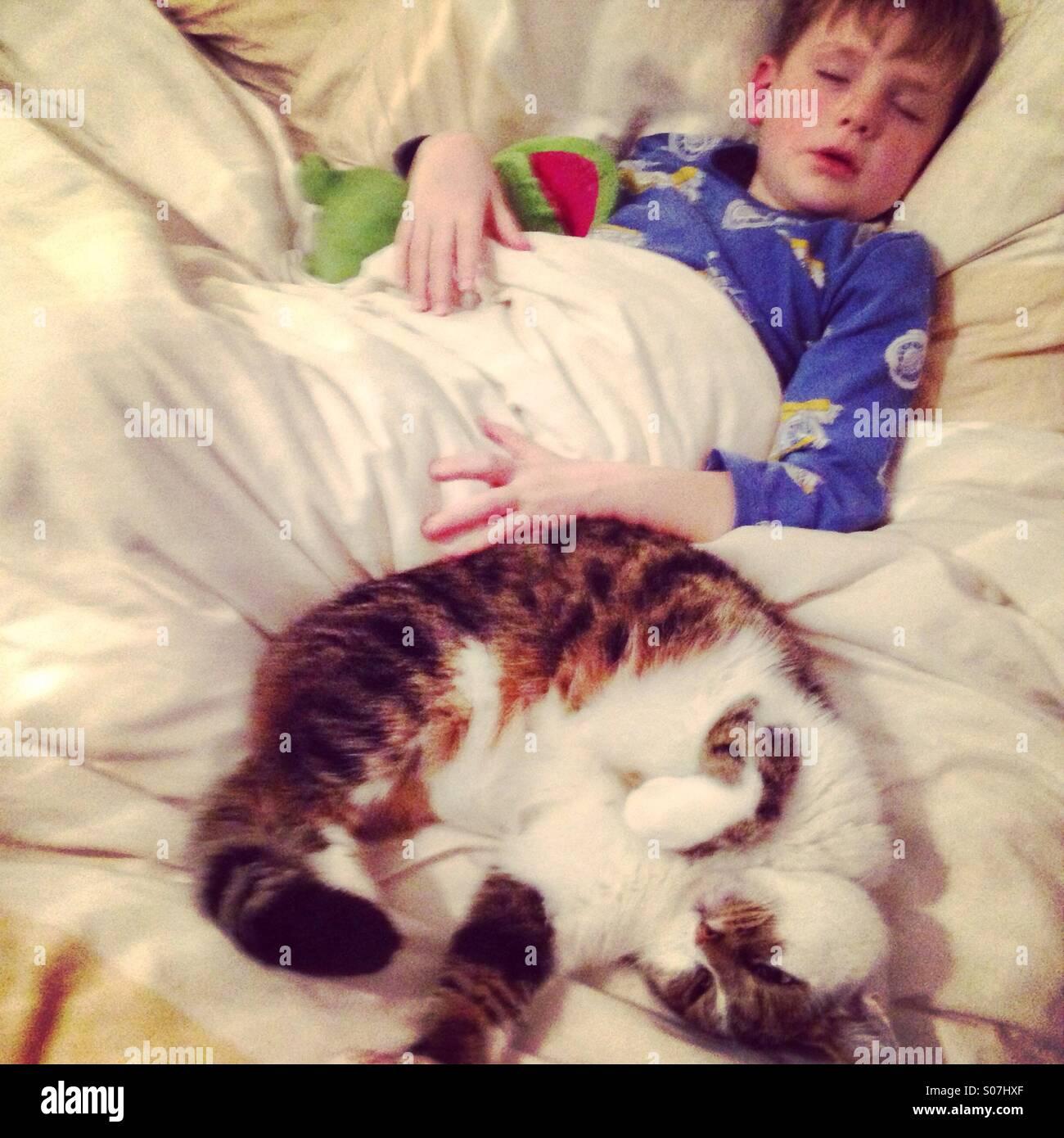 Niño dormido y cat. Imagen De Stock