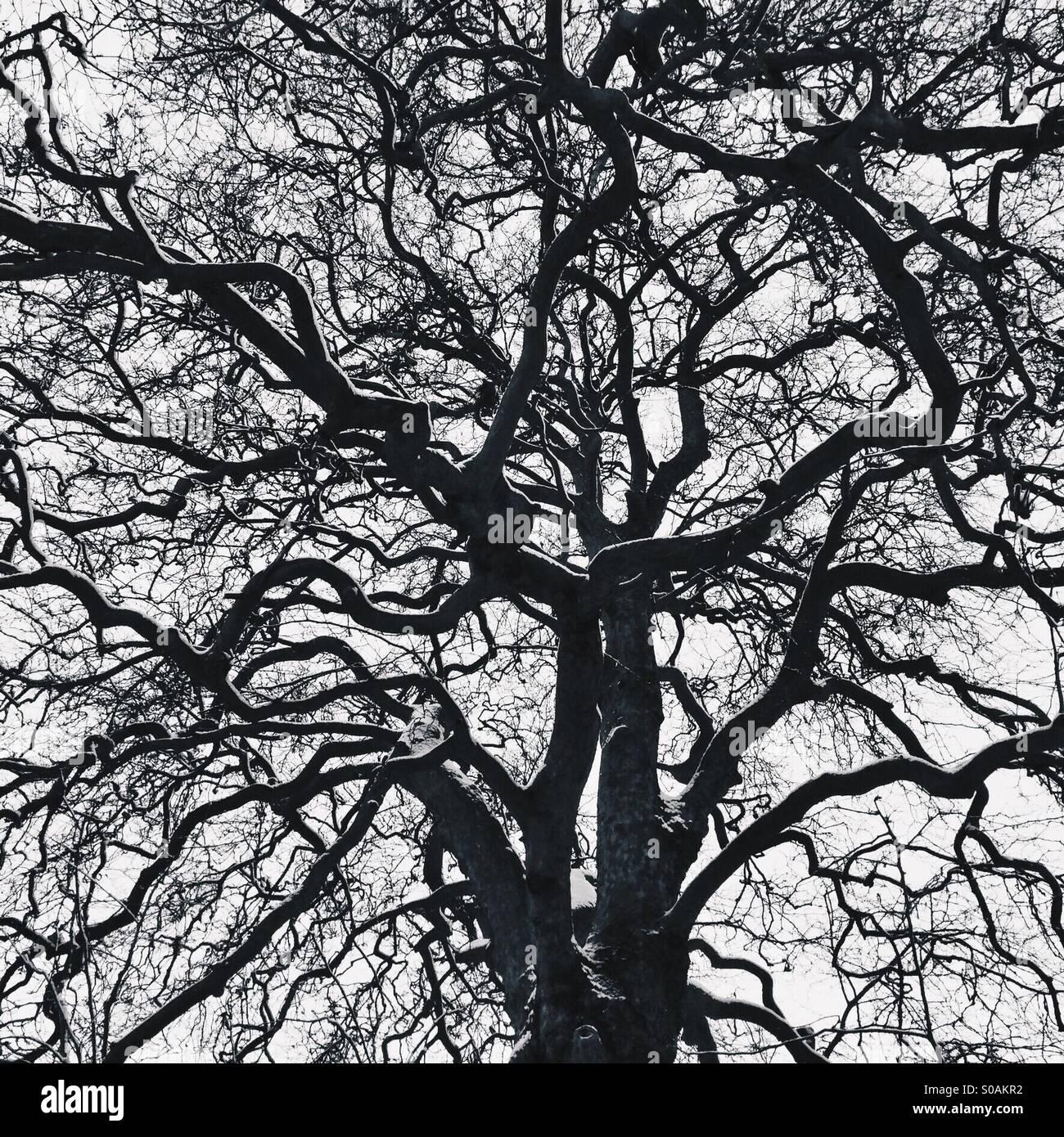 Ramas de los árboles Imagen De Stock