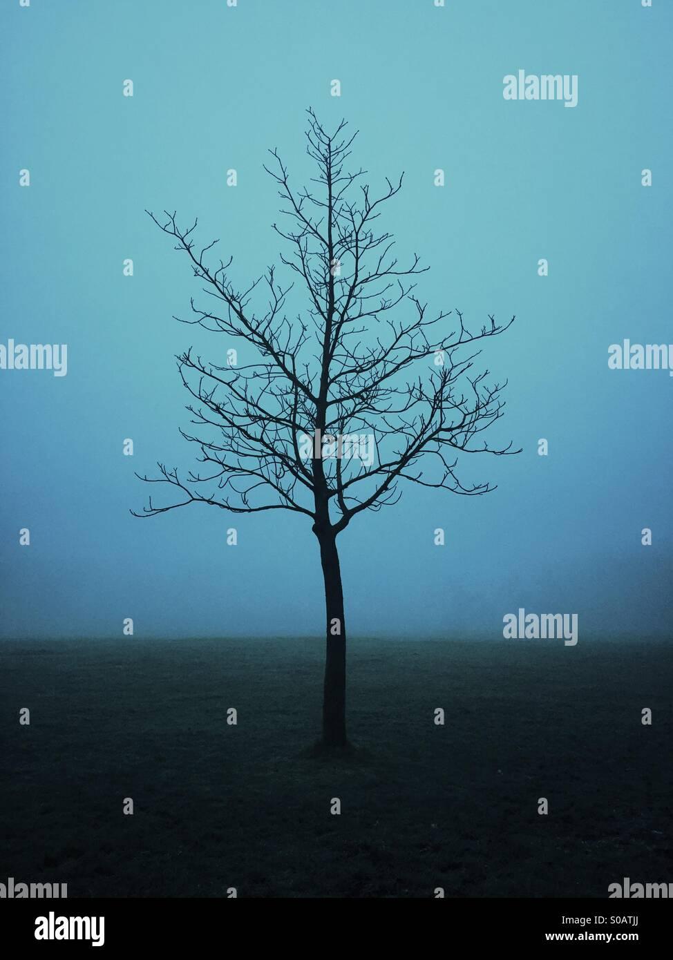 Solitario árbol en la niebla Imagen De Stock