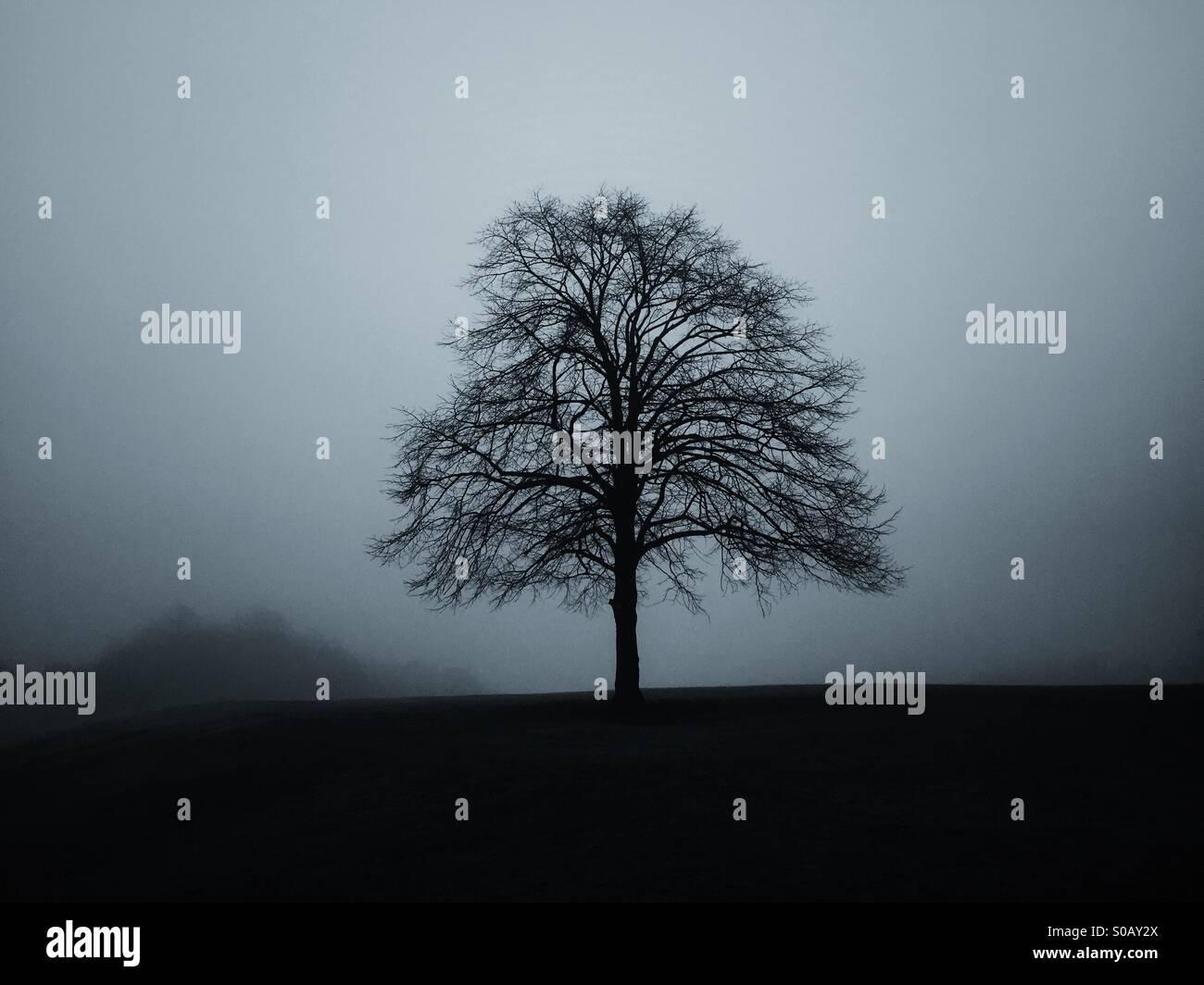Solo árbol en el campo Imagen De Stock