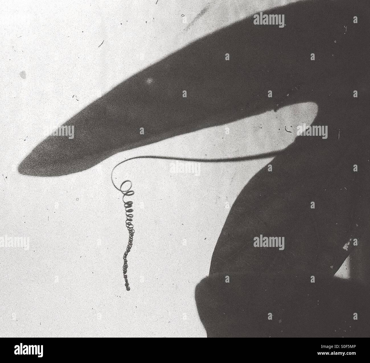Sombra de plantas abstracto Imagen De Stock