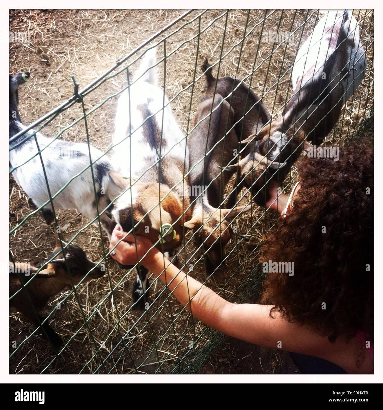 Mujer acariciar cabras pequeñas desde detrás de una valla en una granja Imagen De Stock
