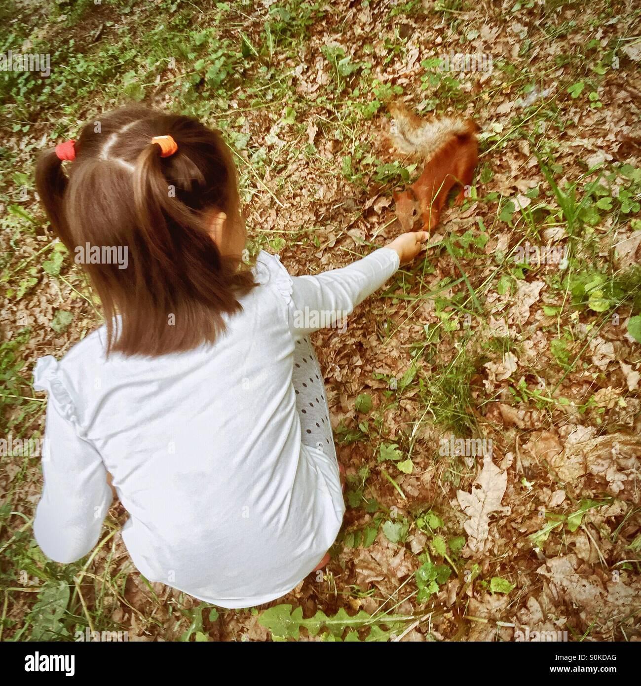 Poco de 5 año de edad chica alimentando la ardilla roja Imagen De Stock