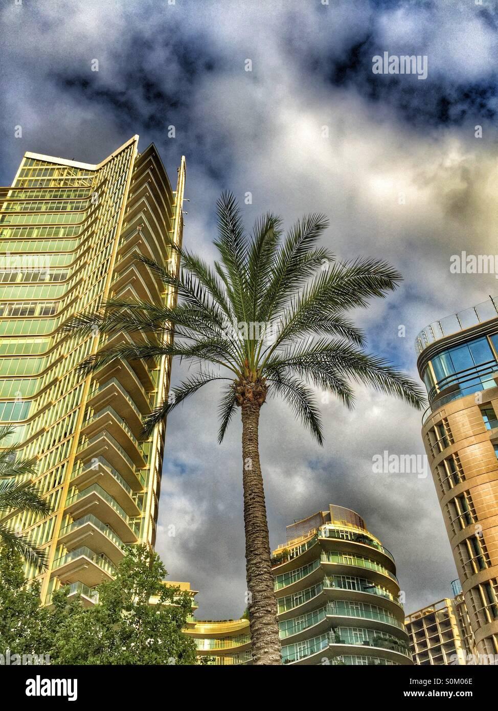 Palm Tree Beirut, Líbano Imagen De Stock