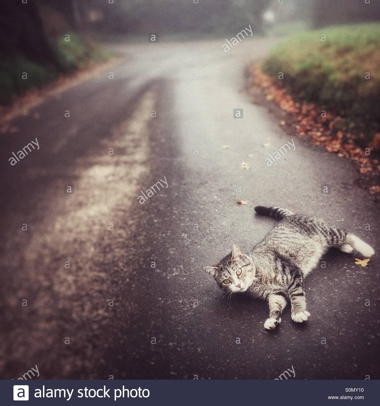 Gato juguetón en la carretera Imagen De Stock
