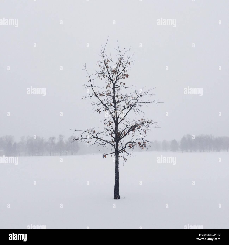 Casi invierno. Foto de stock