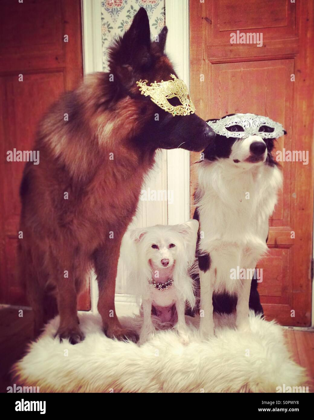 ¡Foto de familia! Imagen De Stock