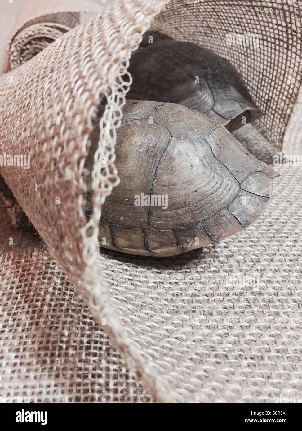 Siesta de tortuga Imagen De Stock