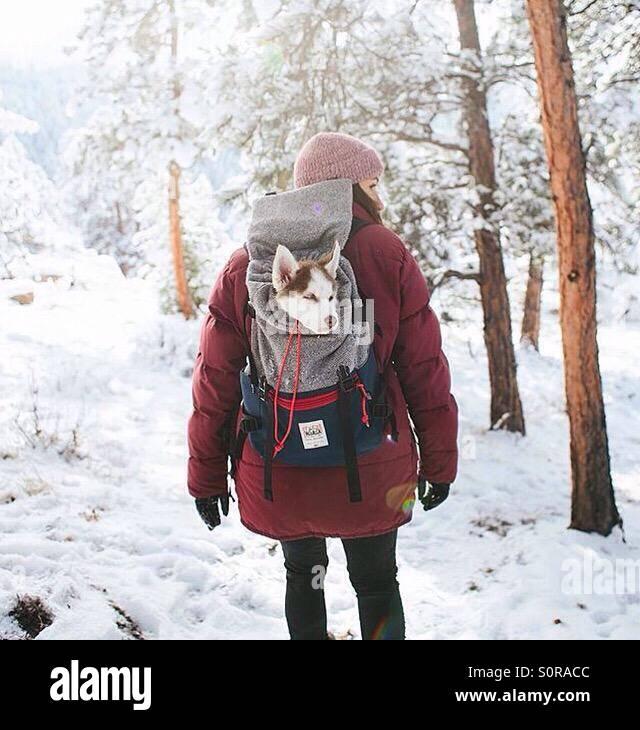 Nieve Foto de stock