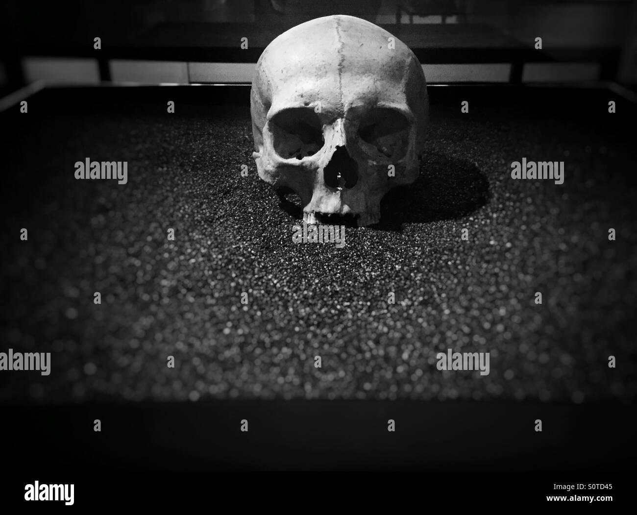 Cráneo histórico en el Museo de Londres Imagen De Stock