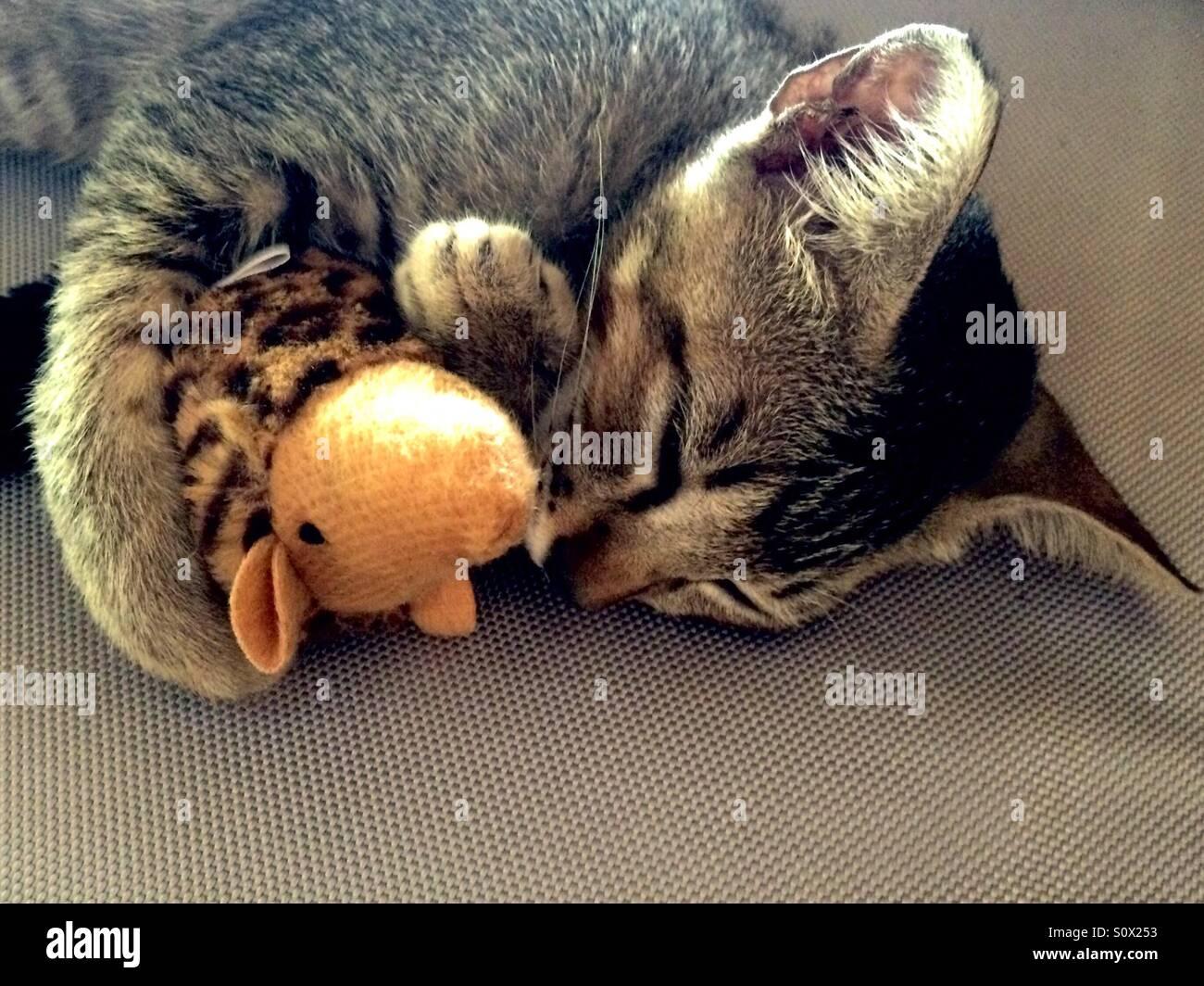 La hora de la siesta con su juguete rat Imagen De Stock