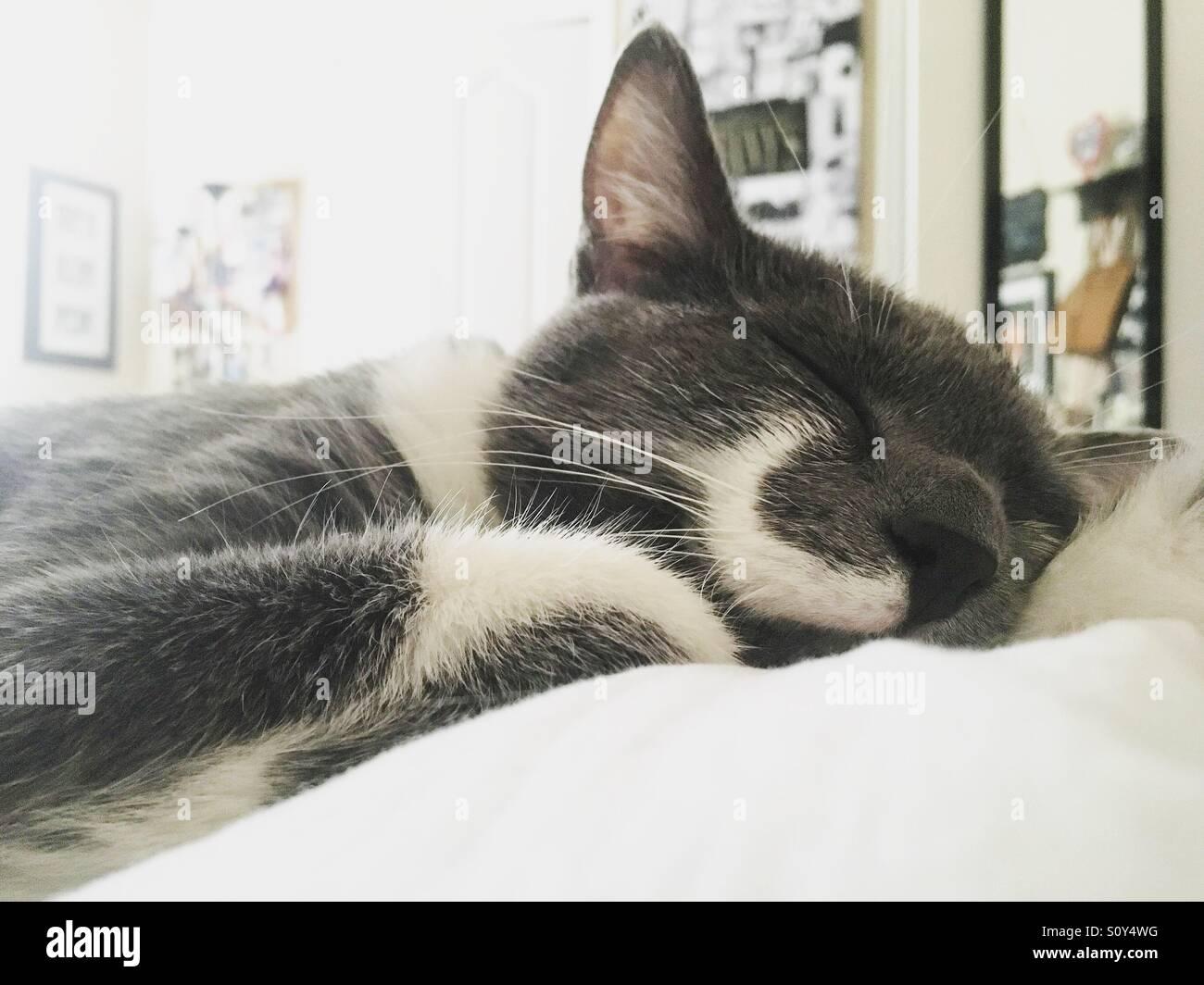 Bigote gato toma una siesta Imagen De Stock