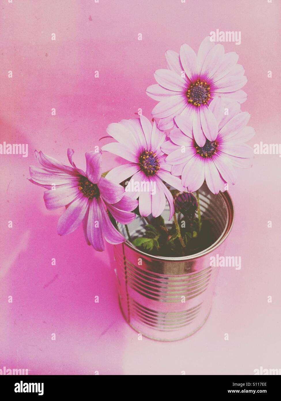 Daisy flores con un filtro aplicado. Foto de stock