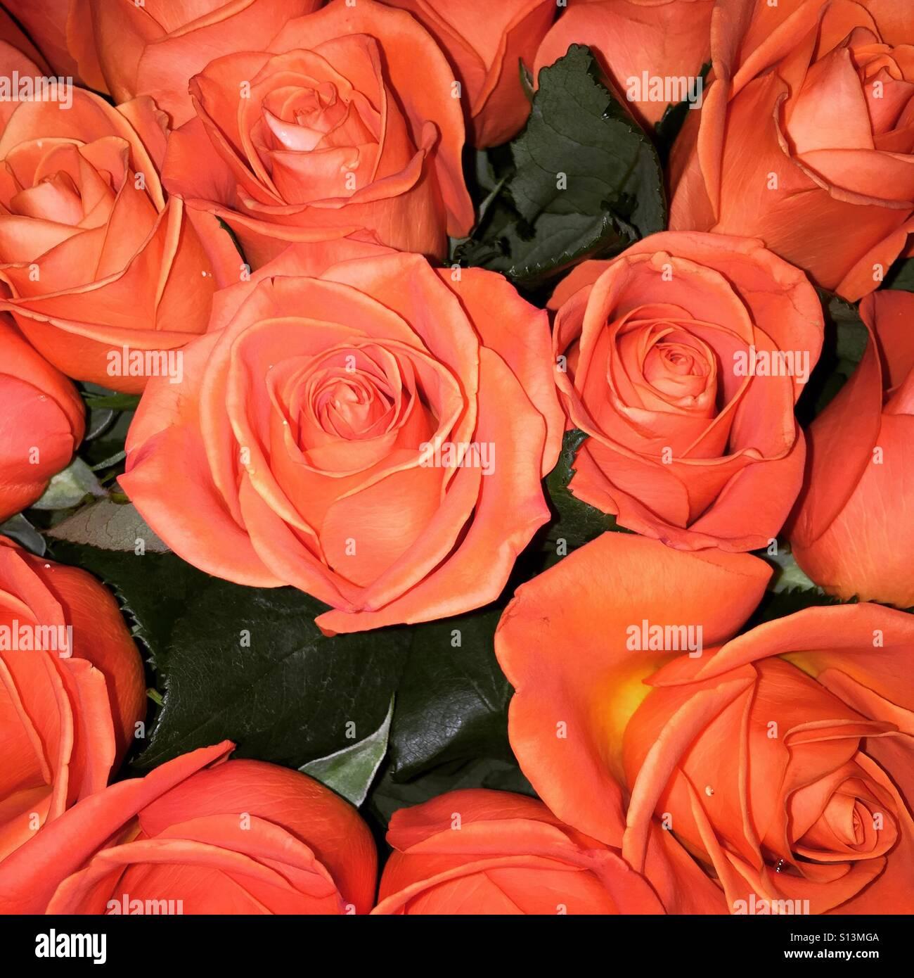 Rosas Bonitas Foto Imagen De Stock 310483274 Alamy