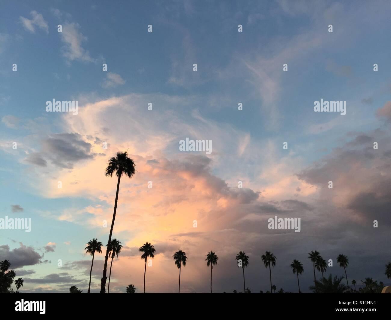 Palmy sunset Foto de stock