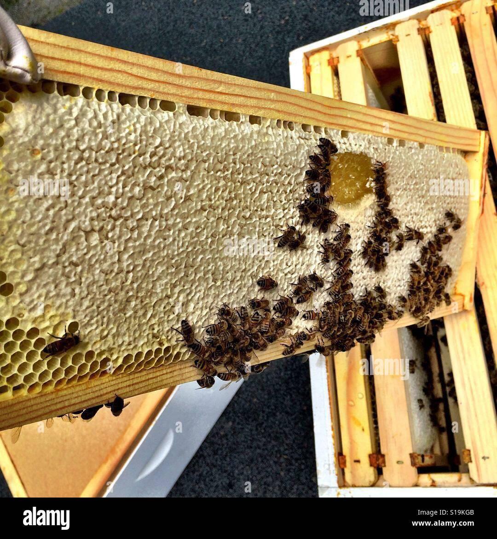 La miel Foto de stock