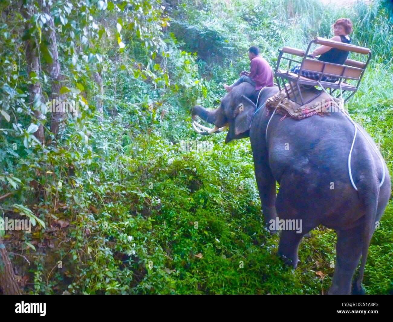 Los safaris de elefantes Foto de stock
