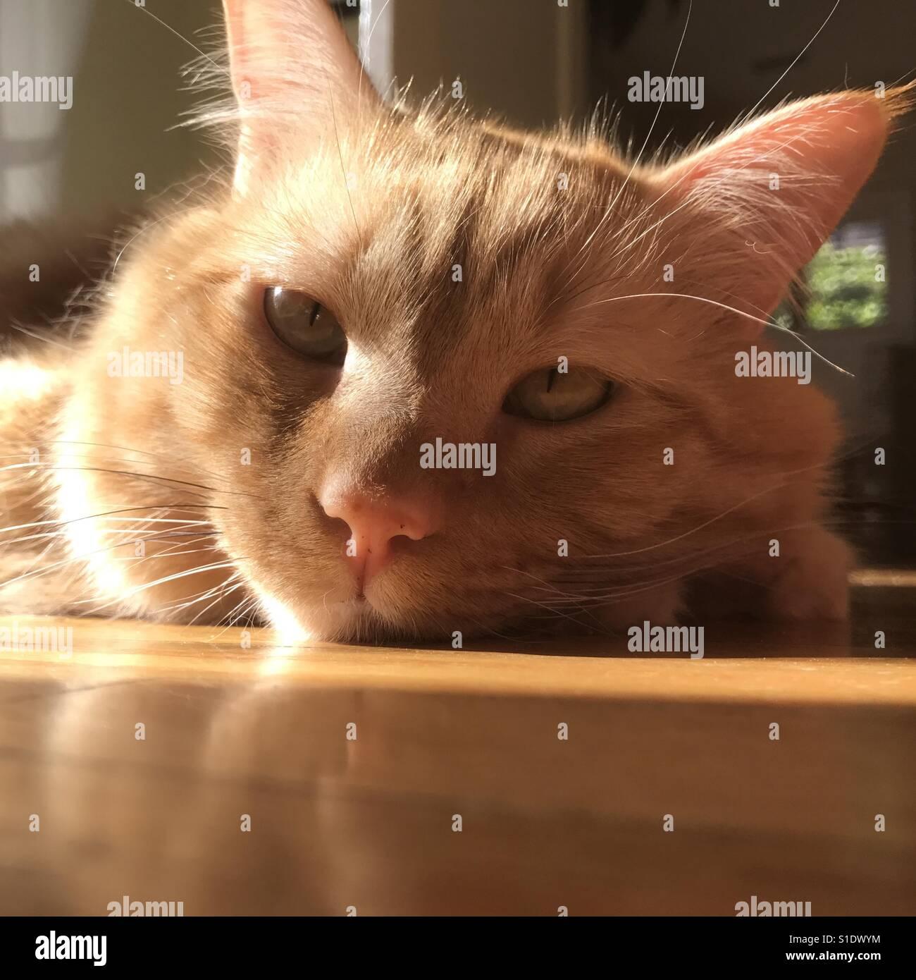 La hora de la siesta de la tarde Imagen De Stock