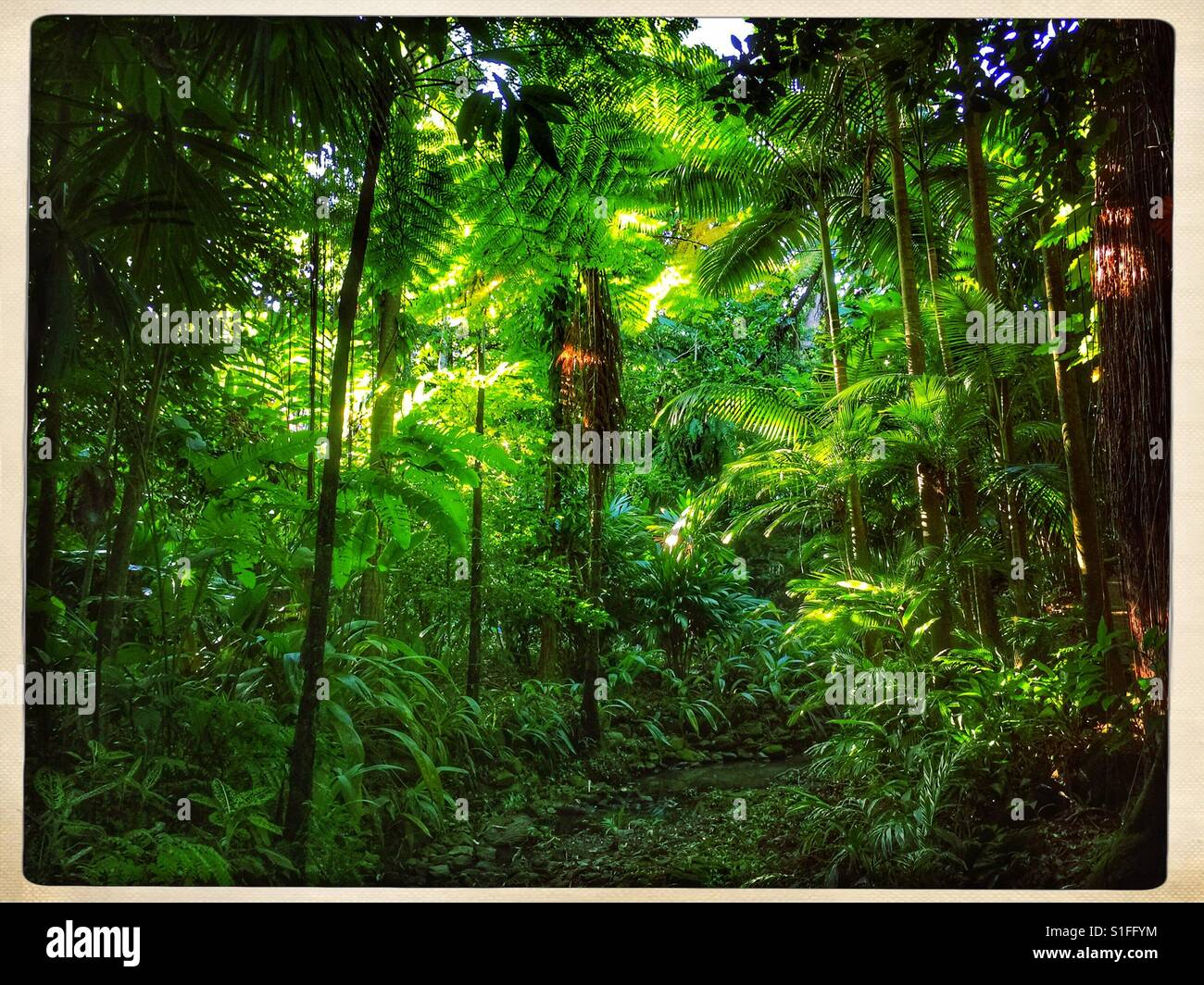 A pie de la selva Imagen De Stock
