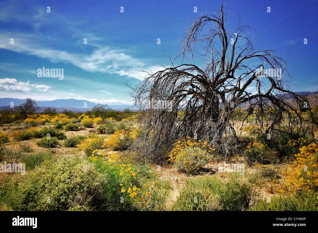 Árbol solitario Foto de stock