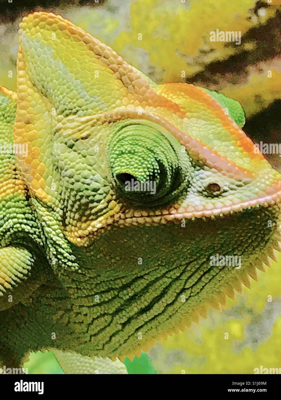 Camaleón en super color saturado Imagen De Stock
