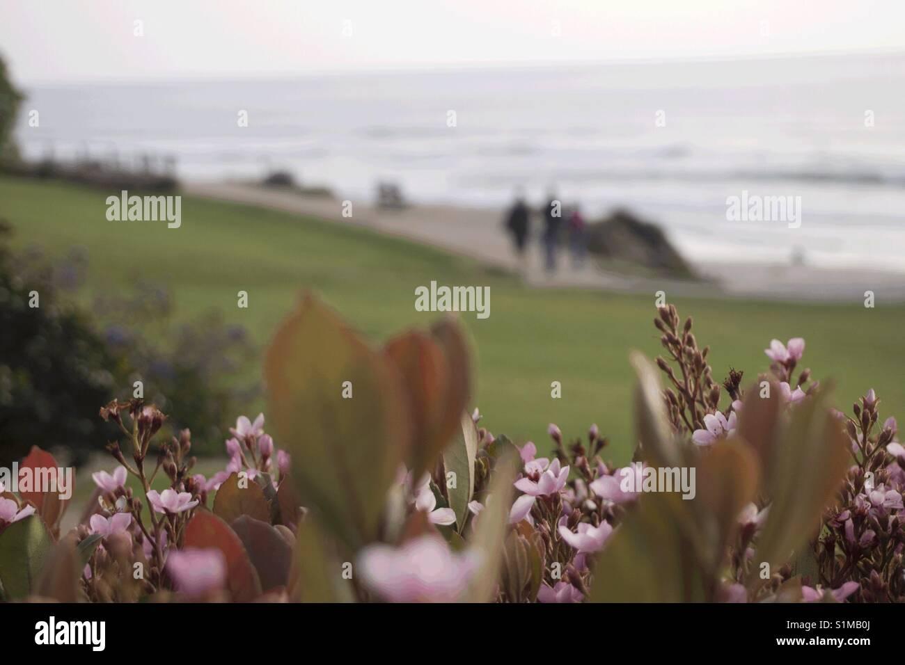 Playa Flores Foto de stock