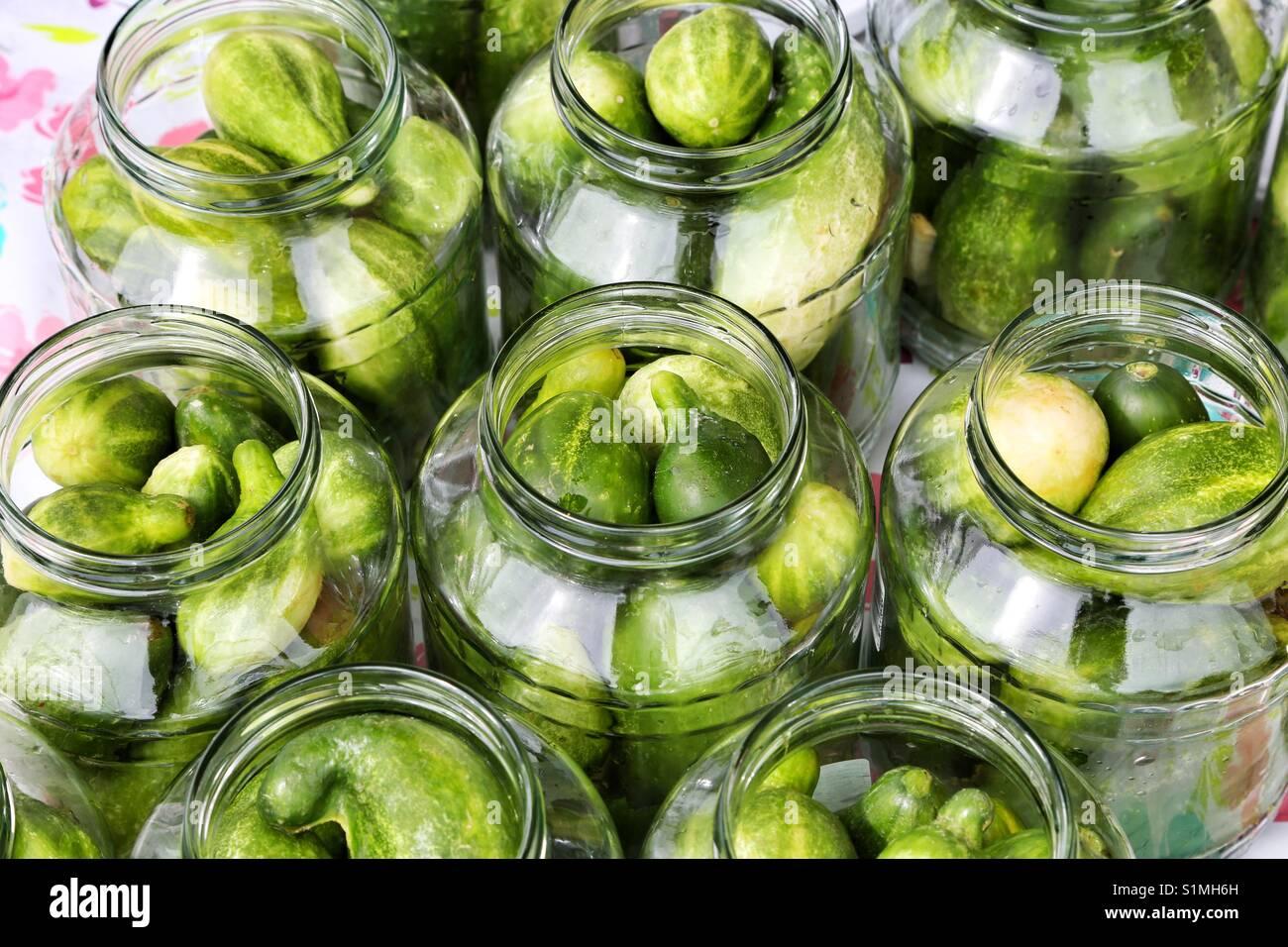Los pepinos encurtidos Imagen De Stock