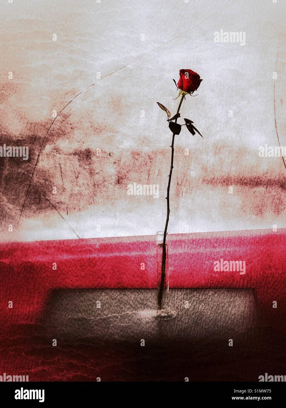 Una solitaria rosa roja en un florero sobre una mesa Foto de stock