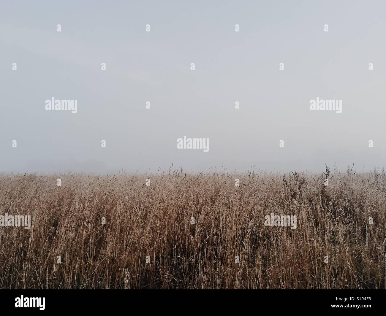 Campo de hierba en niebla por la mañana. Imagen De Stock