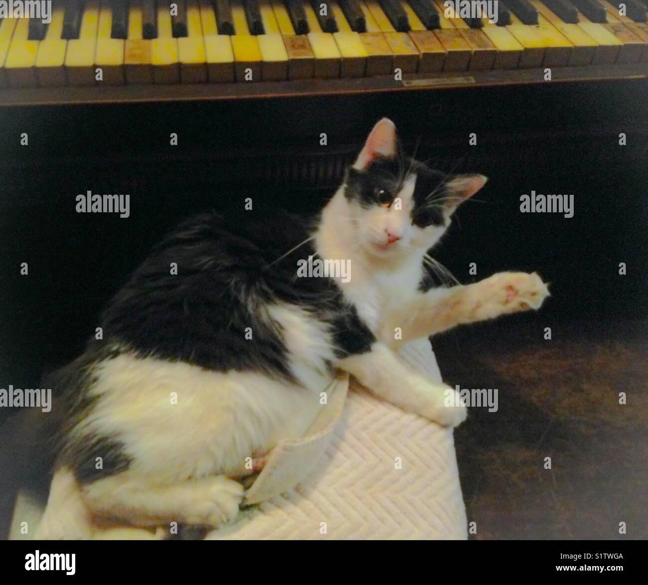 La hora de la siesta por el piano Imagen De Stock