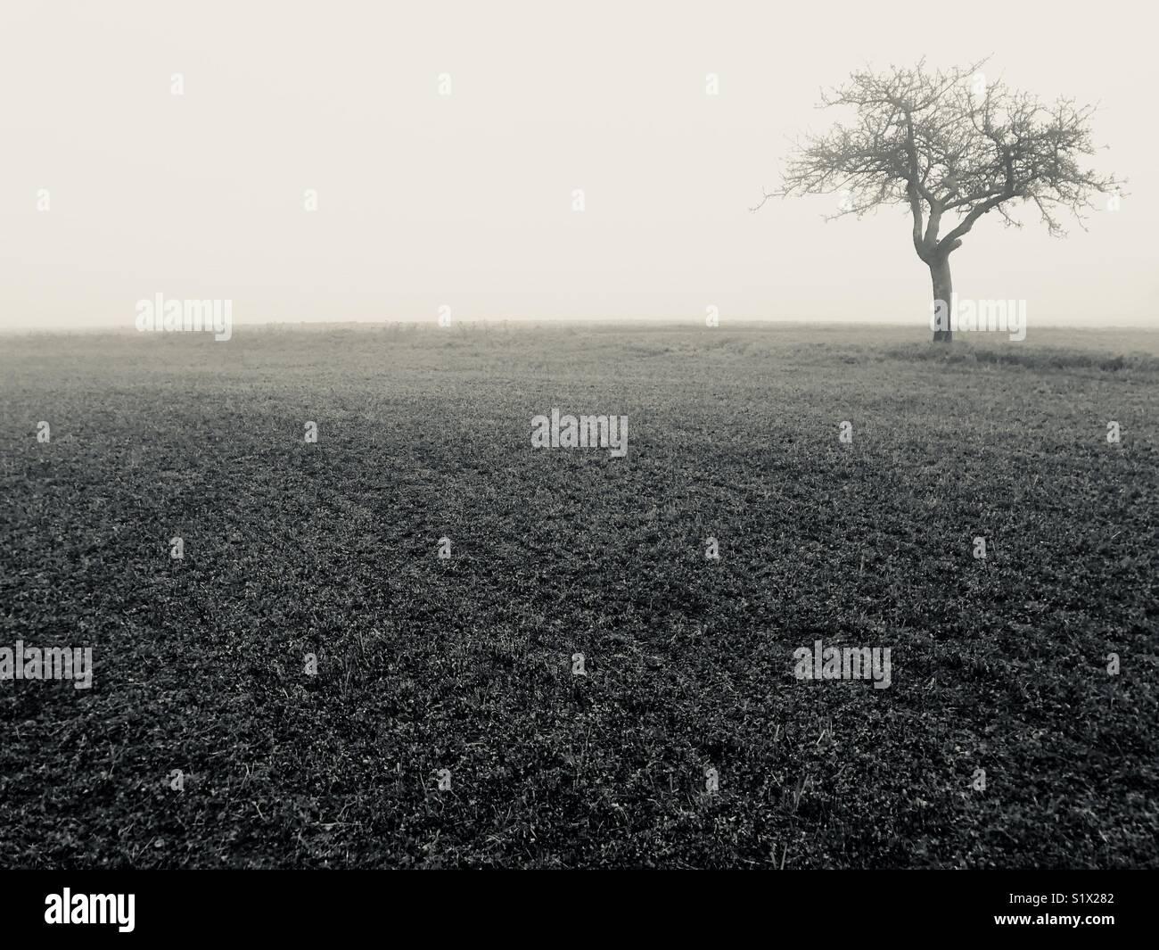 Solos en el invierno de árbol Imagen De Stock