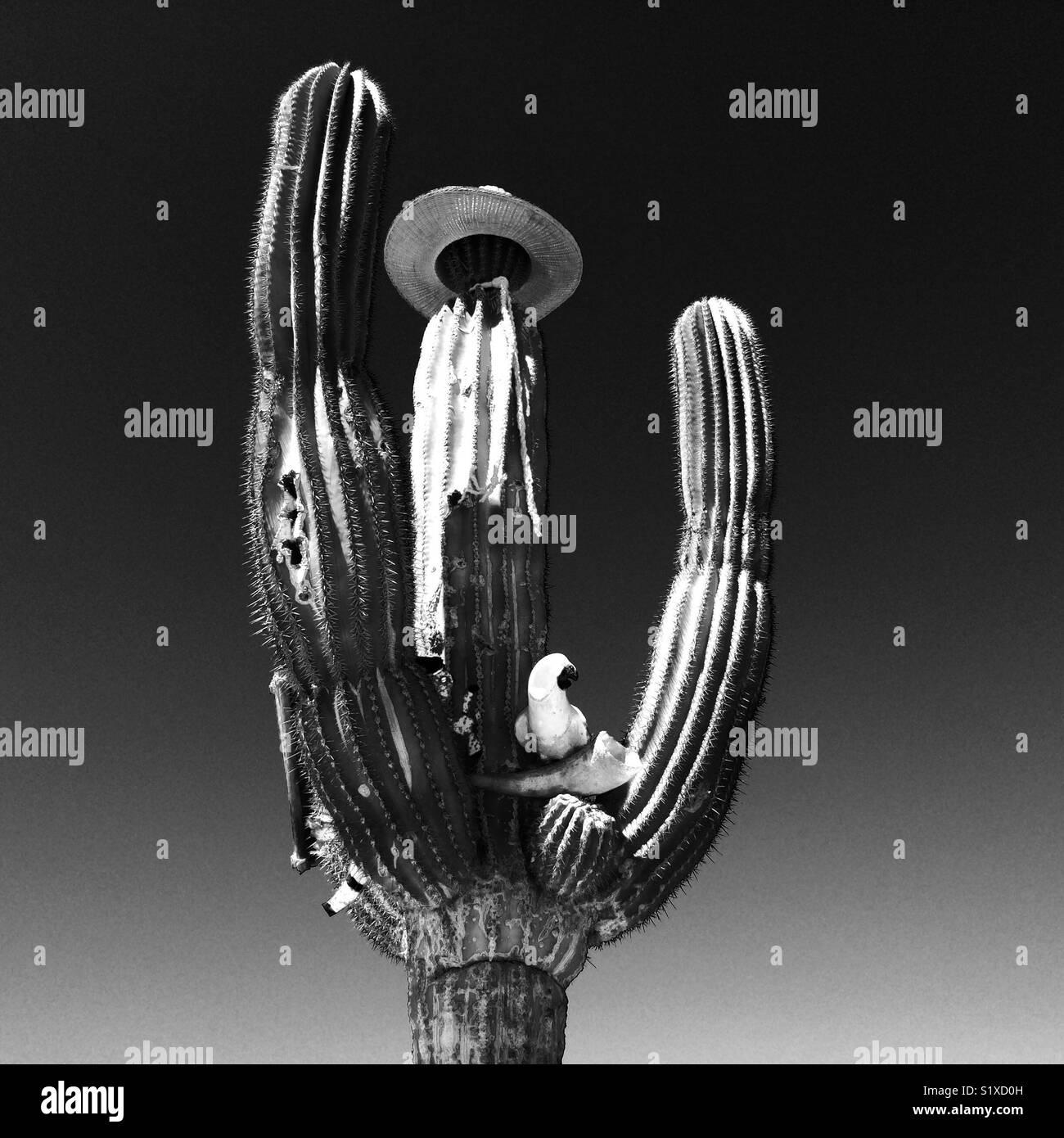 Cactus con adiciones aleatorias en México Imagen De Stock