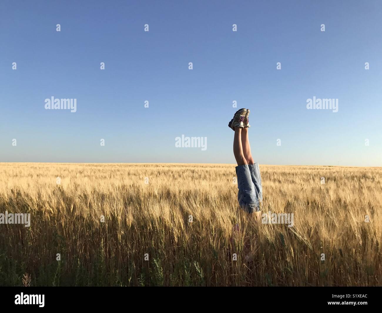 Una niña hace un pino en un campo de trigo. Imagen De Stock