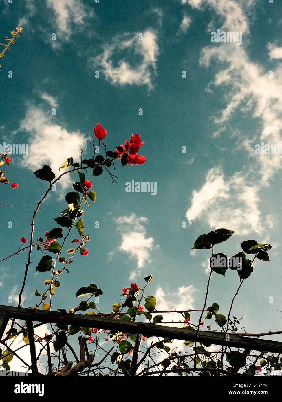 Brisa de verano Imagen De Stock