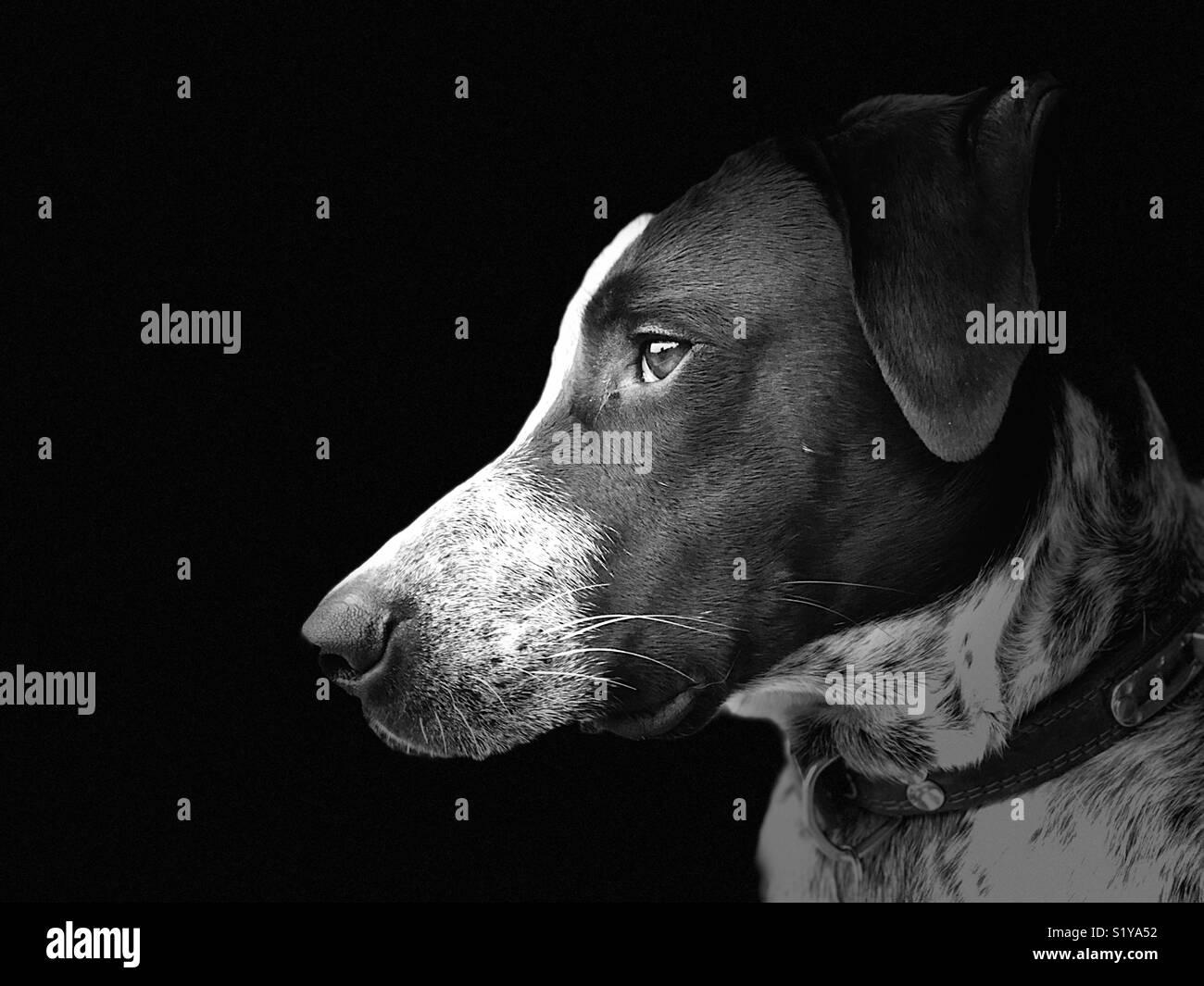 Fotografía en blanco y negro de perro Imagen De Stock