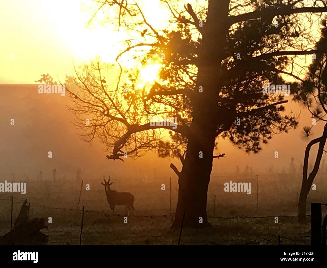 Salida del sol Imagen De Stock