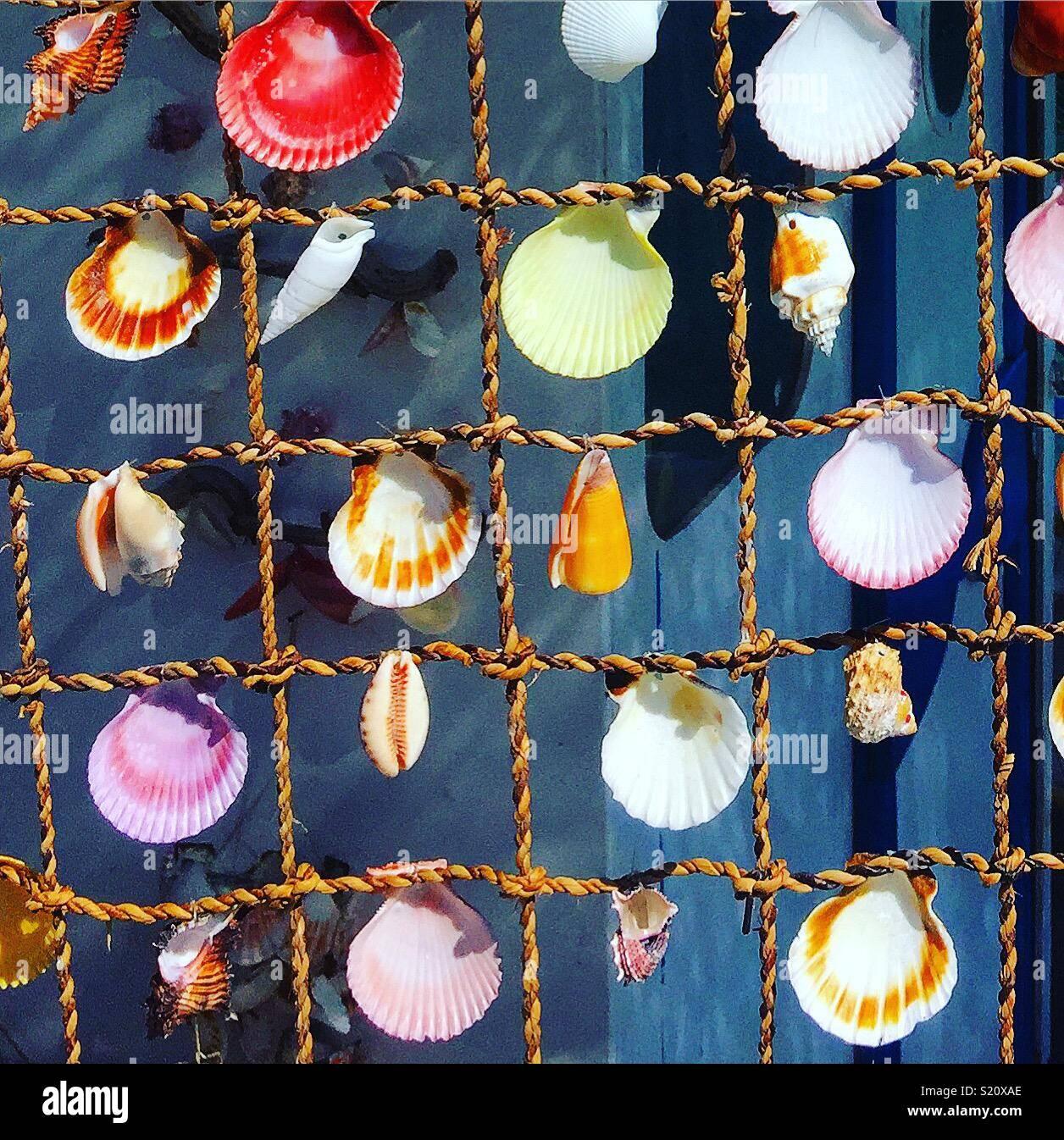 Conchas marinas Foto de stock