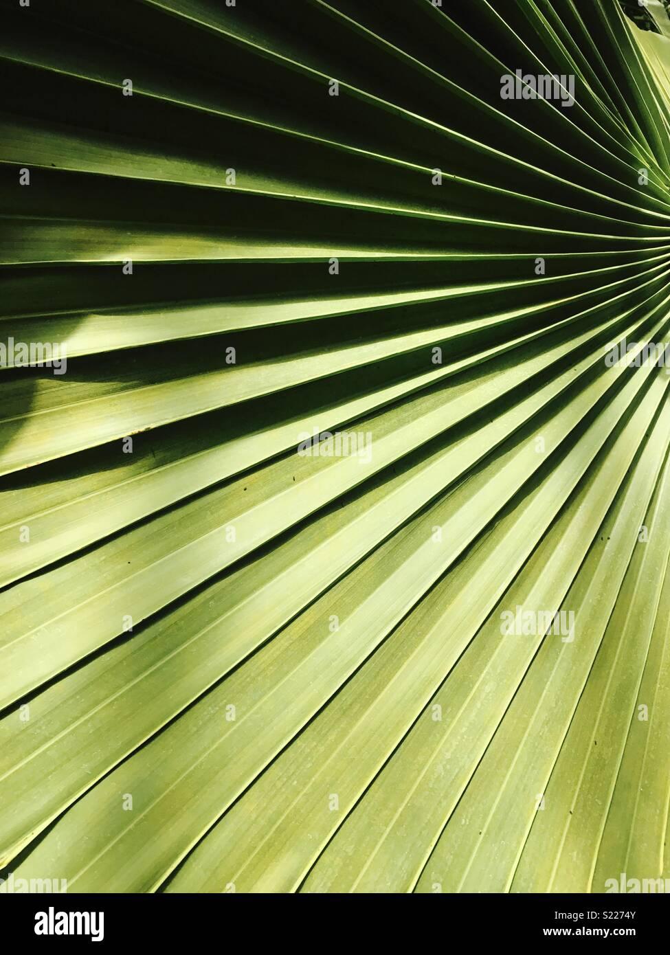 Leaf Imagen De Stock