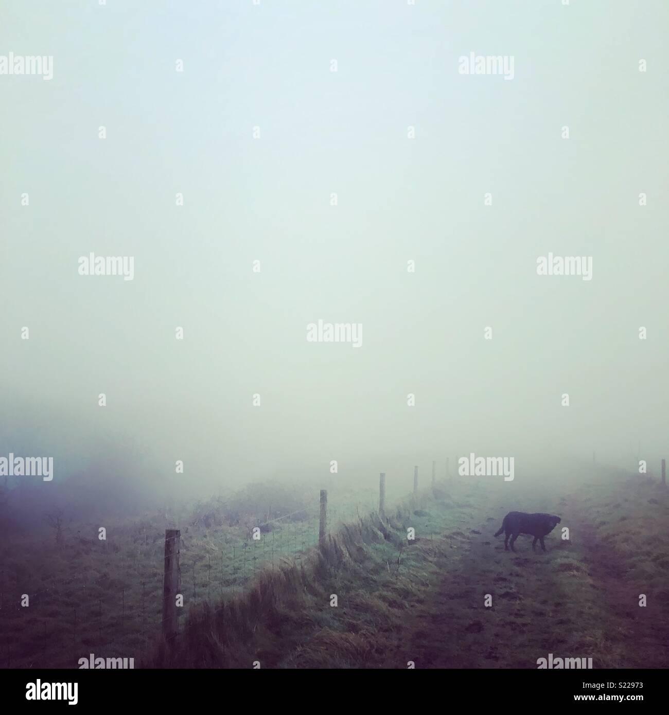 Niebla perro a pasear. Imagen De Stock