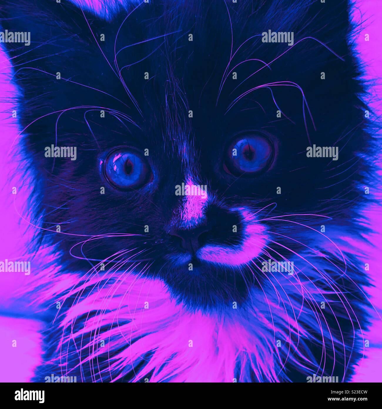 Cerca de un gatito en color púrpura estilo Pop Art Foto de stock