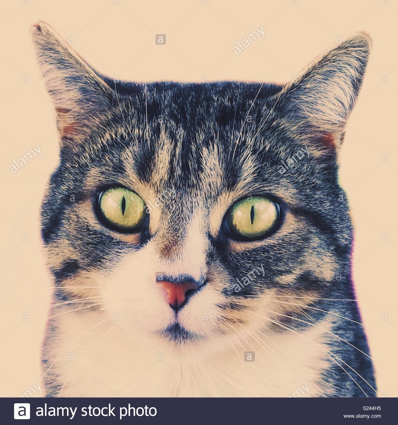 Retrato de un gato atigrado gris Imagen De Stock