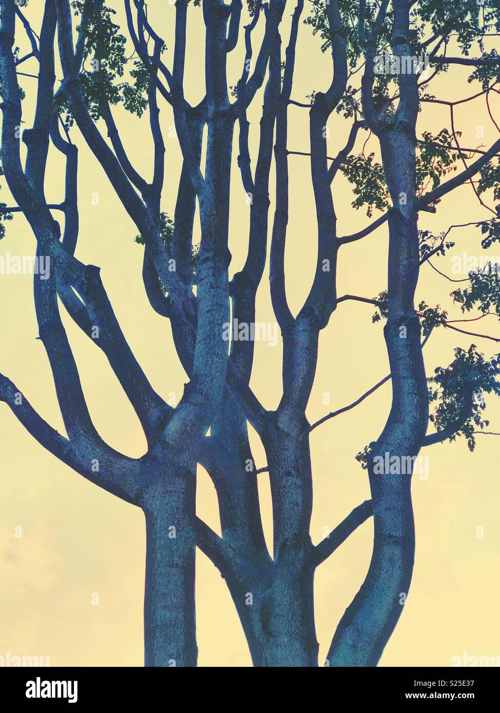 Un resumen de un árbol de color azul contra un fondo amarillo Imagen De Stock