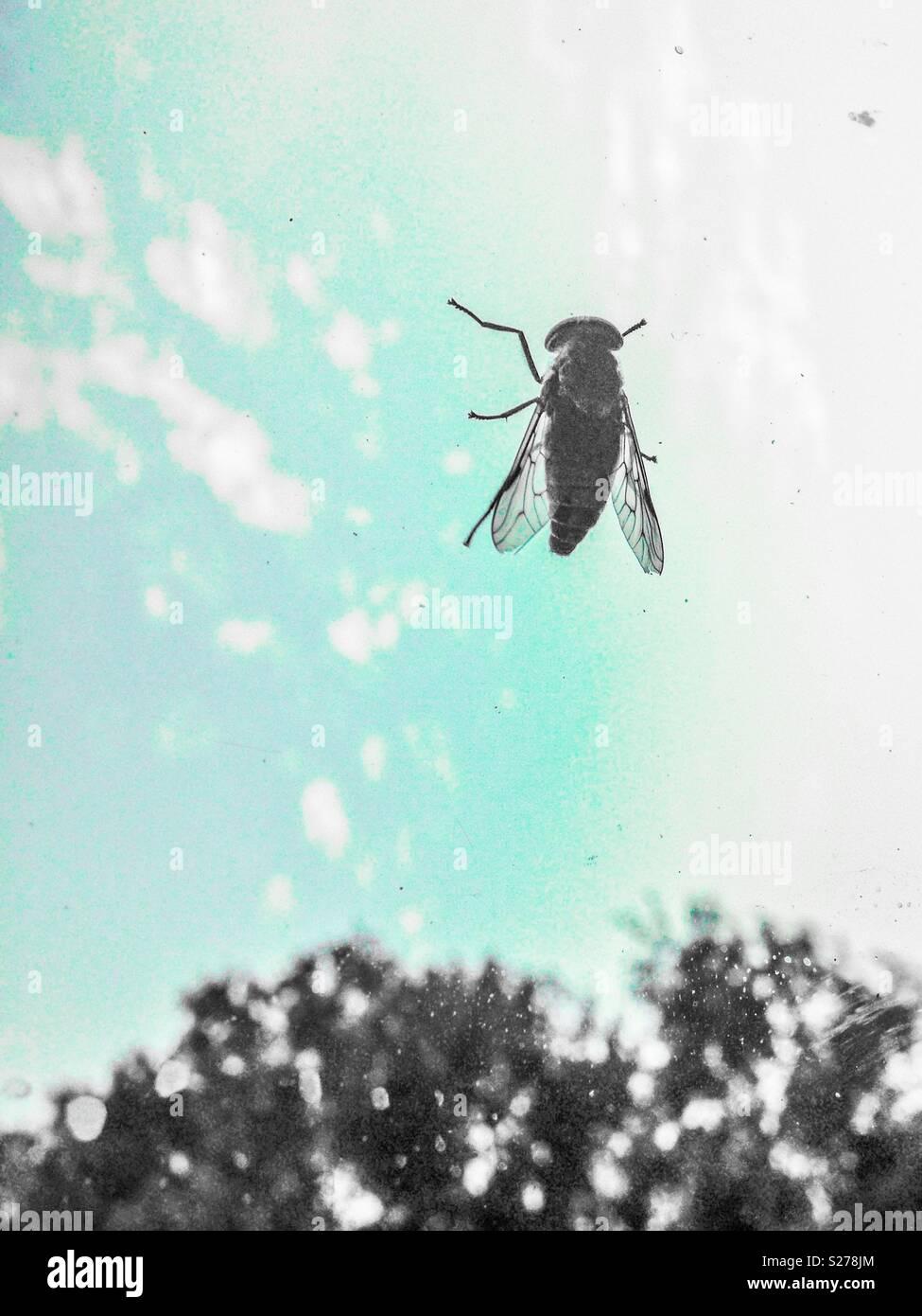 En la ventana con la mosca común aqua sky Foto de stock