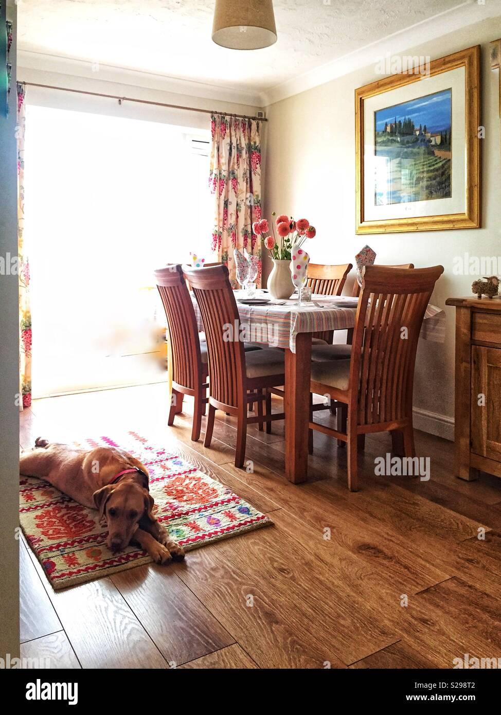 Un hogar acogedor interior con una mesa de comedor para una comida familiar y un perro perezoso durmiendo en una manta en el suelo de madera Imagen De Stock
