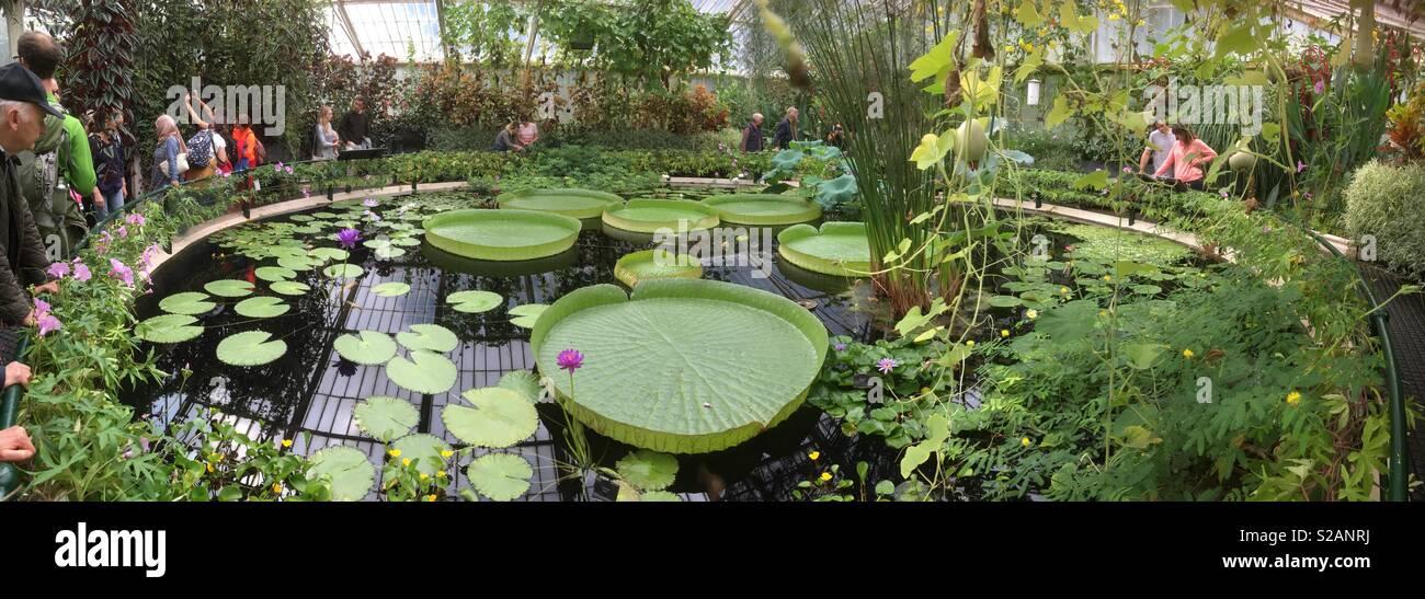 La casa waterlily con gigantes ninfas en el Real Jardín Botánico de ...