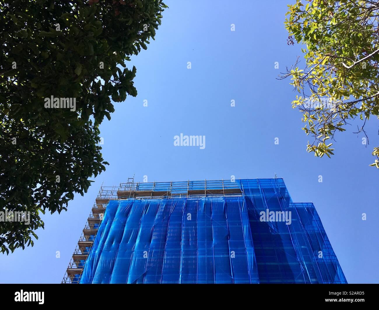 Edificio cubierto de andamios azul contra un cielo azul visto entre dos árboles. Imagen De Stock