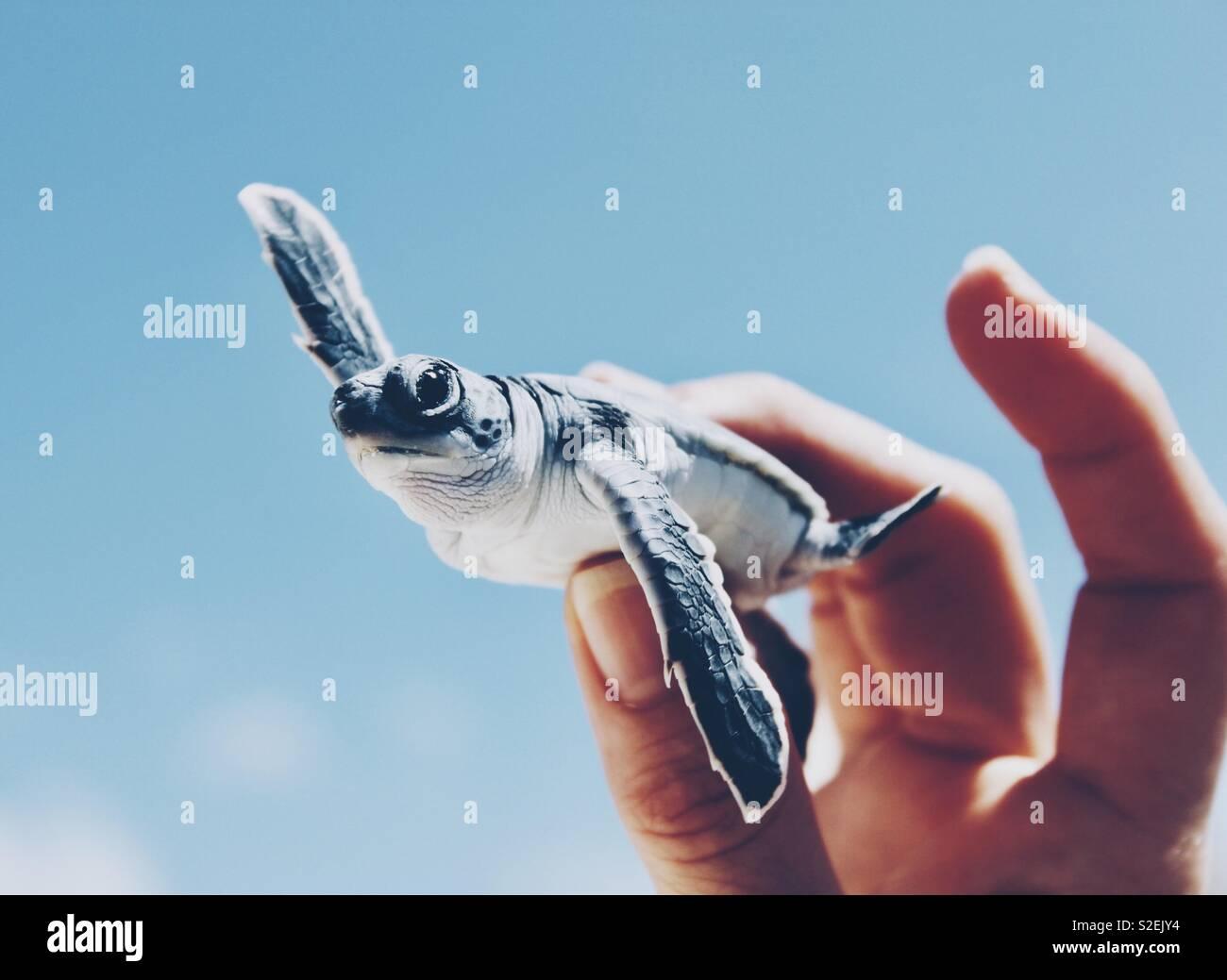 Tortuga de mar Imagen De Stock