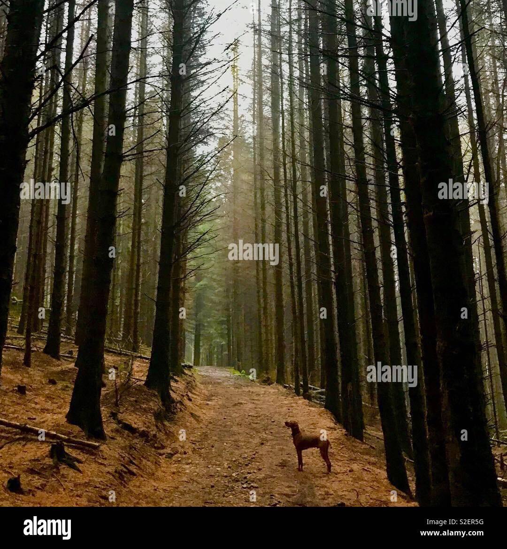 A pie de bosque Foto de stock