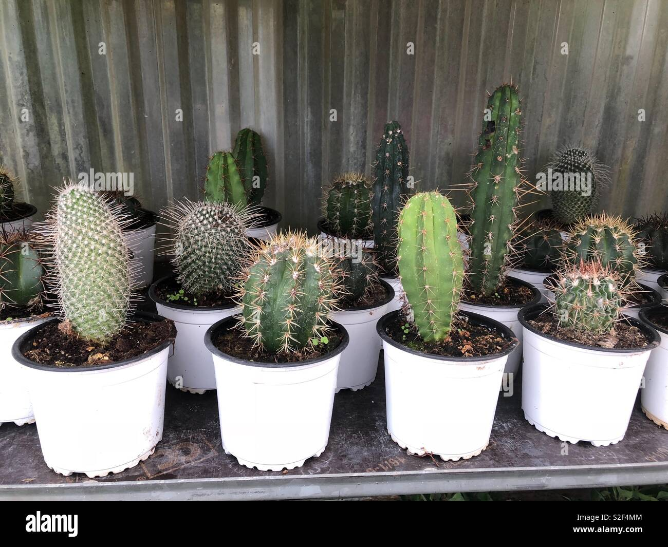 c42930dc2 Little Cactus Imágenes De Stock & Little Cactus Fotos De Stock - Alamy